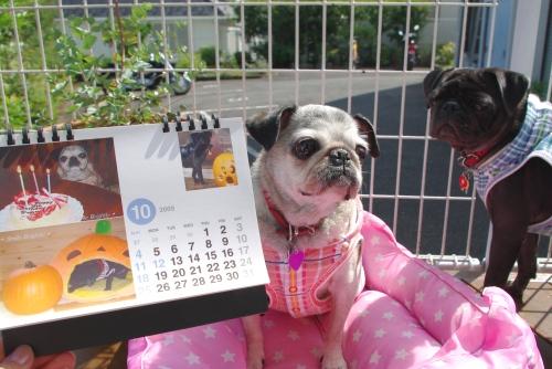 09100110月カレンダー