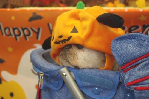 091017かぼちゃ