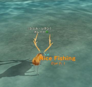 今日も釣り