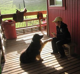 犬と少女1