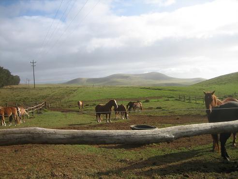 パニオロ牧場~