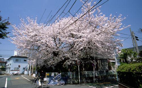 tonayinokakura111.jpg