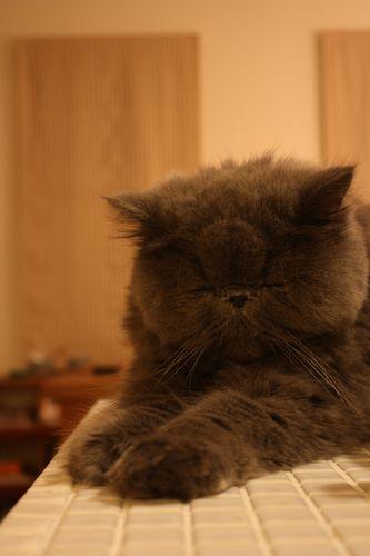 アイランド眠
