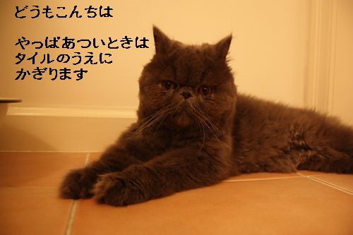 IMG_7412.jpg