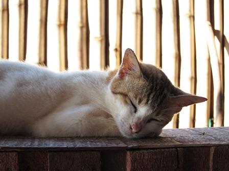 blog_ダイビングサービスの猫120211