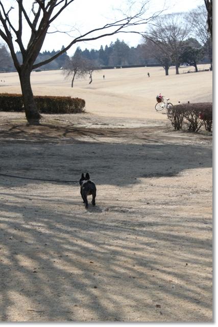 20110226昭和の森芝生エリア