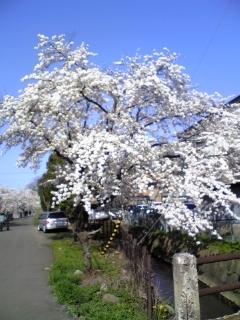 平井写真ブログ