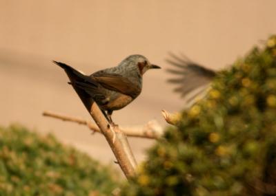 IMG_1611鳥