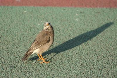 IMG_1619鳥