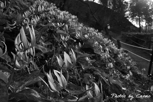 カタクリ山に陽は落ちて