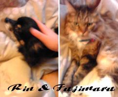 RIN and FUJIMARU