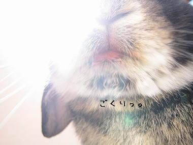 s11-IMG_8.jpg