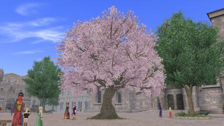 リスボンの桜