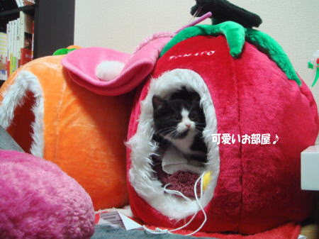 みかんとトマトのベッドが可愛い♪