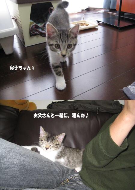 すくすく猫ちゃん