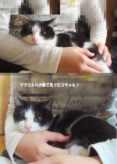 ママ&ピコ