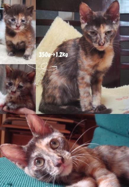 cyai02_20090806190134.jpg