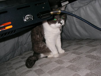 cat1027.jpg