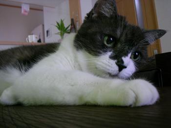 cat1214.jpg