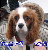 CIMG1181_convert_20120213171826.jpg