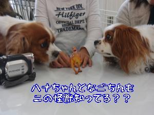 CIMG1226_convert_20120213172334.jpg