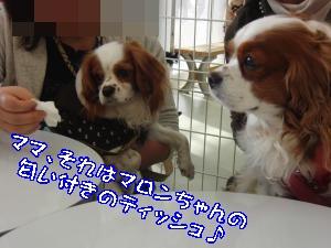 CIMG1255_convert_20120213172631.jpg