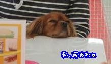 DSCF6329_convert_20111125165257.jpg