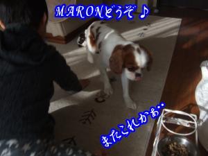 DSCF6697_convert_20120130172403.jpg