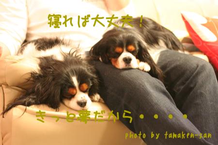 20080322_7058s.jpg