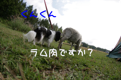 IMG_4579b.jpg
