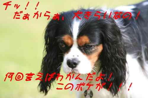 IMG_5482.jpg