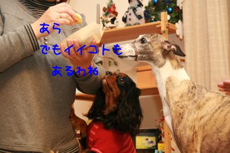 IMG_6795n_20071211182946.jpg