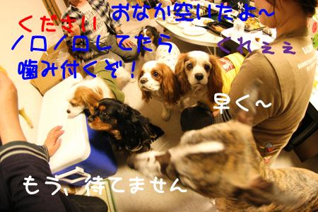 IMG_9704s.jpg
