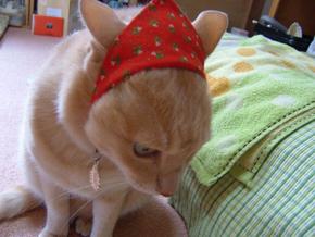 メリークリスマス・・・-s
