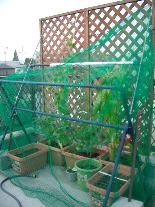 090626-野菜3
