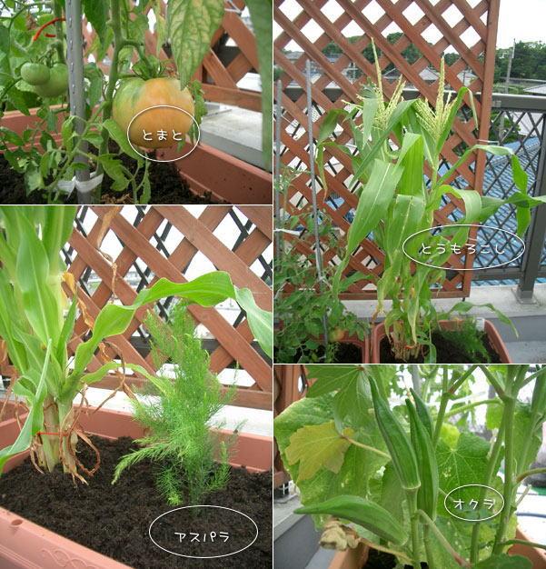 090626-野菜2