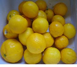 Cooking_Lemon1