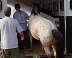 HorseBackRidingTrailer2