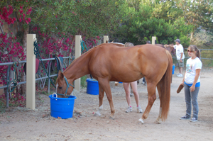 HorseBackRidingTrailer4