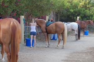 HorseBackRidingTrailer5