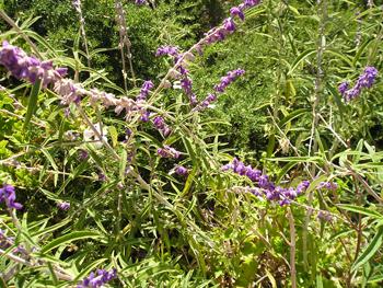 Lavender&Rosemary