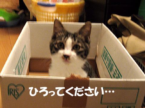 10日目h