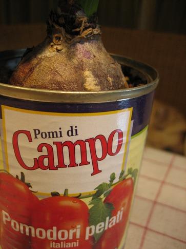 ホールトマトの缶詰