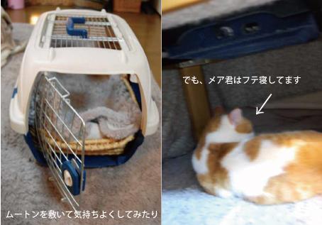 02_20090130101452.jpg