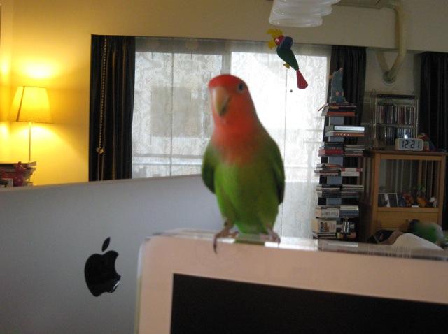 verde on mac