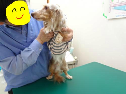snap_chapuco_201211184852.jpg