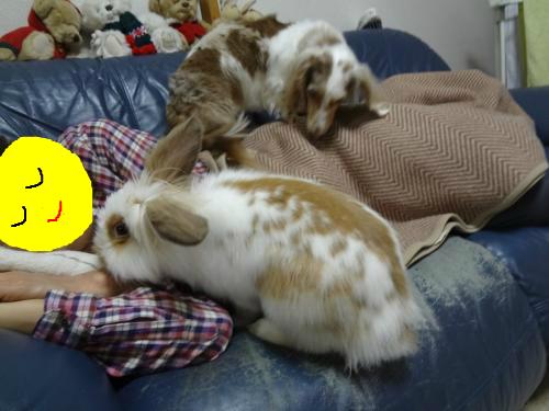 snap_chapuco_201211192847.jpg