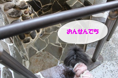 IMG_2534.jpg
