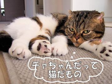 017.JPG猫だもの