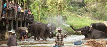 elephant park2